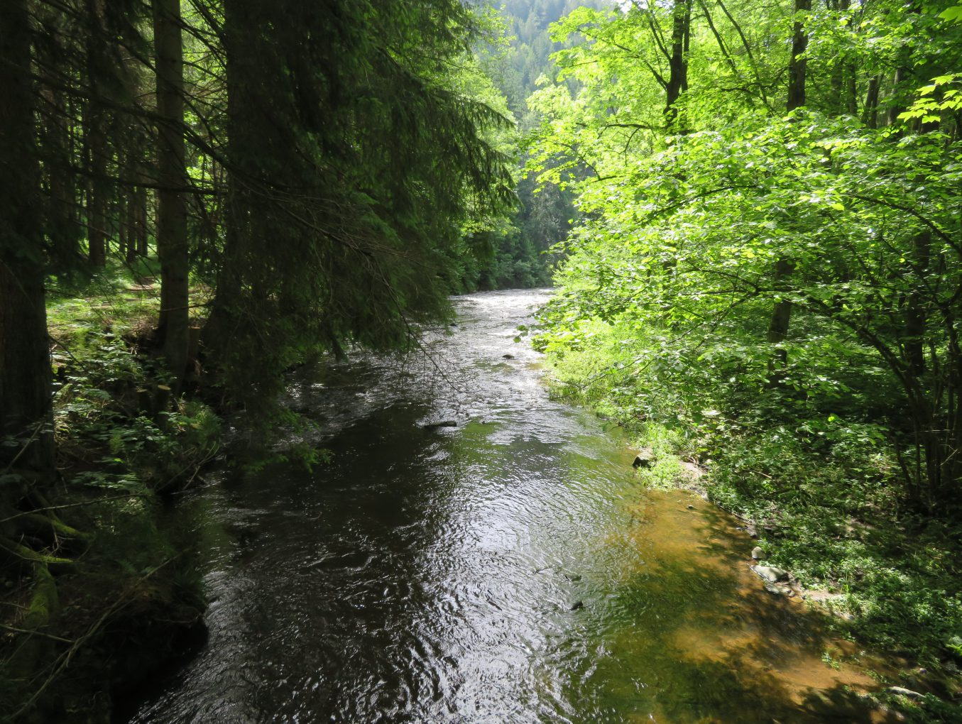 Naturerlebnis Waldviertel