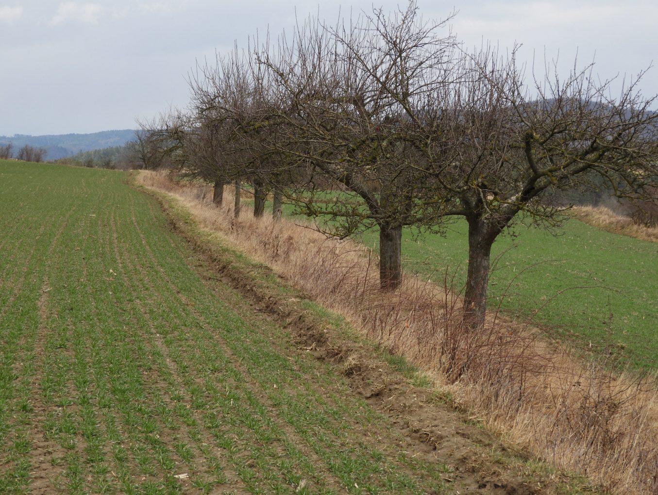 Obstbaumschnitt- und Veredelungskurse 2021 - jetzt anmelden!