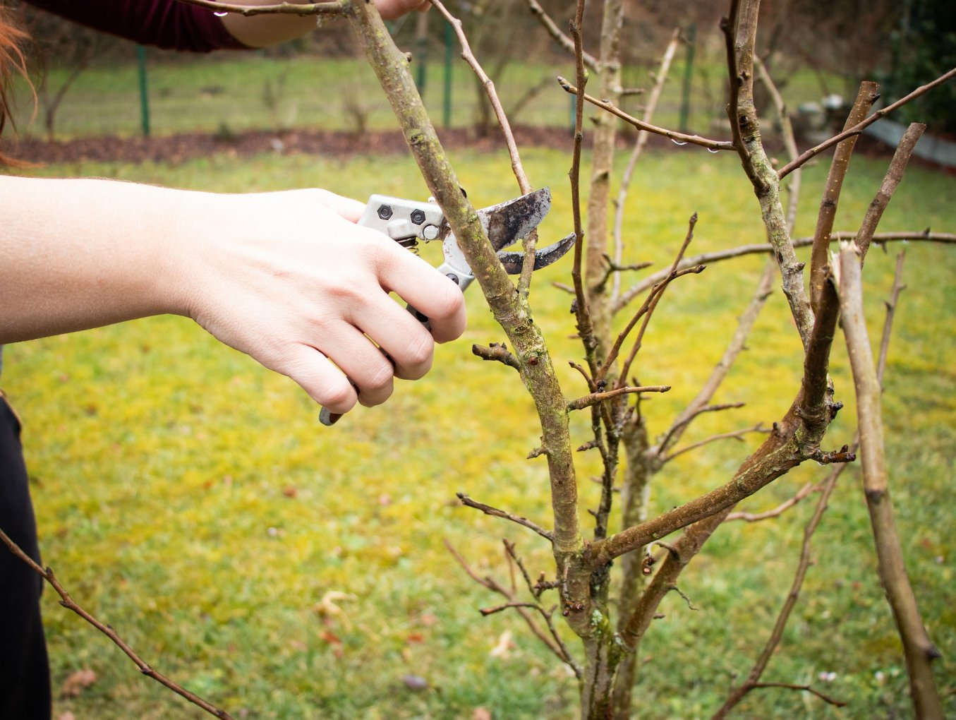 Obstbaumschnittkurse im Sommer - jetzt anmelden!