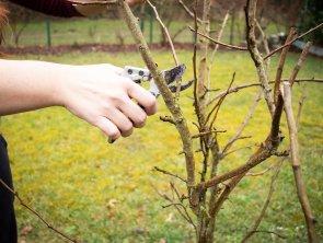 Obstbaumschnittkurse im Sommer – jetzt anmelden!